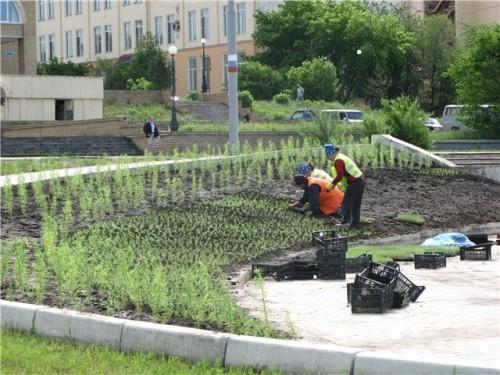 Озеленение города
