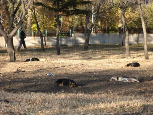 Бродячие собаки Омска